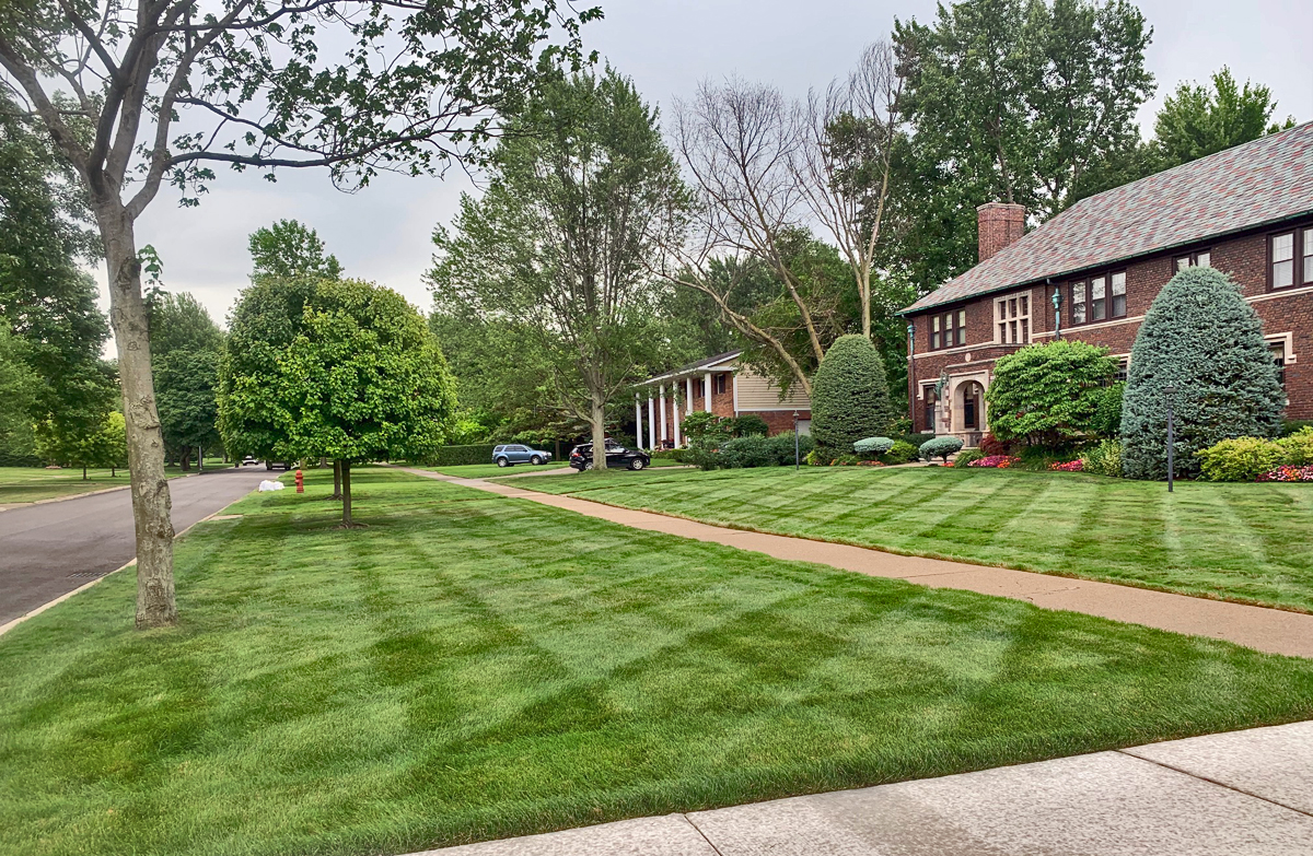 Tips to Have the Most Beautiful Lawn on the Block