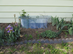 Window well cover to prevent wildlife entrapment. Photo by Stephen M. Vantassel.