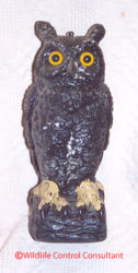 The owl effigy is perhaps the most famous and well known frightening device. Photo: Stephen M. Vantassel.
