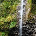 Dudú, Isla Reunión