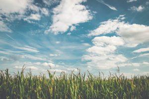 field-1521332_640