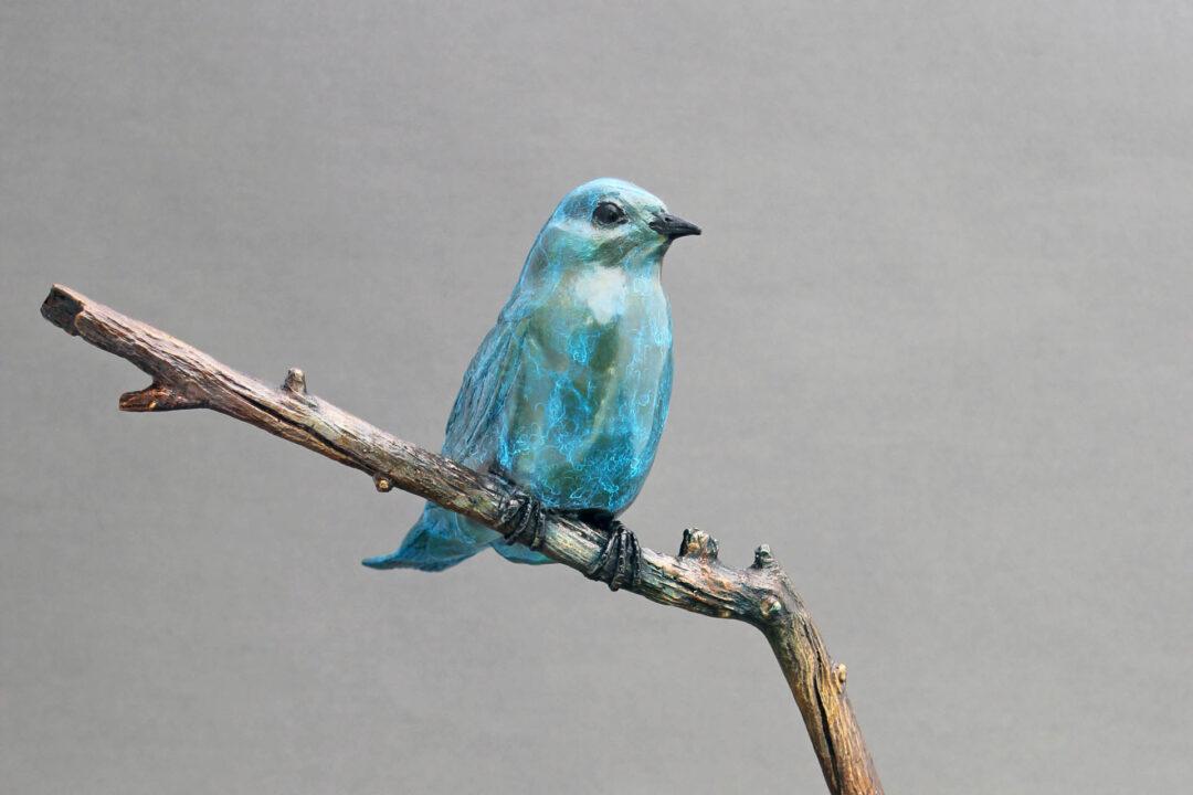 Bronze Mountain Bluebird