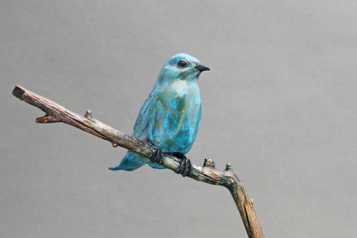 Bronze Mountain Bluebird