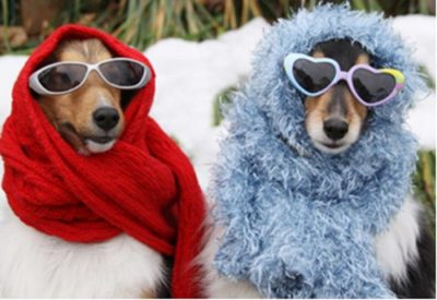 Save dogs from biting cold in winter for good health- Vet Varsity Expert