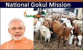 Himachal's first Gokul Gram to be set up at Thana Kalan in Una district