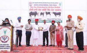 Need to conserve Nili Ravi Buffalo – Dr. Inderjeet Singh, VC Vet Varsity