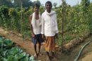 मनरेगा - बाड़ी विकास से संवरने लगी किसानों की जिंदगी,  छत्तीसगढ़ के नंदौरखुर्द के सात किसानों ने भाठा ज़मीन में सब्जी-भाजी उगाकर बढ़ाई अपनी आमदनी,
