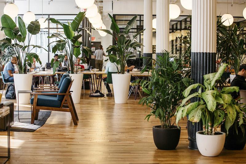 Encouraging people to return to work. Biophilic office design.