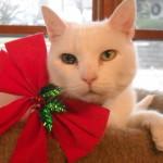 RIP Riley the shop cat