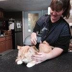 Feline grooms also available at the groomstation in west branch iowa