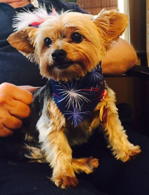 Groom station in West Branch, Iowa offers a wide range of pet grooming services