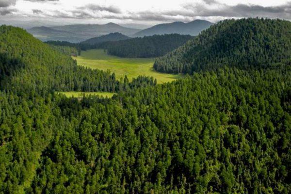 México pierde un tercio de sus bosques por baja productividad: IMCO