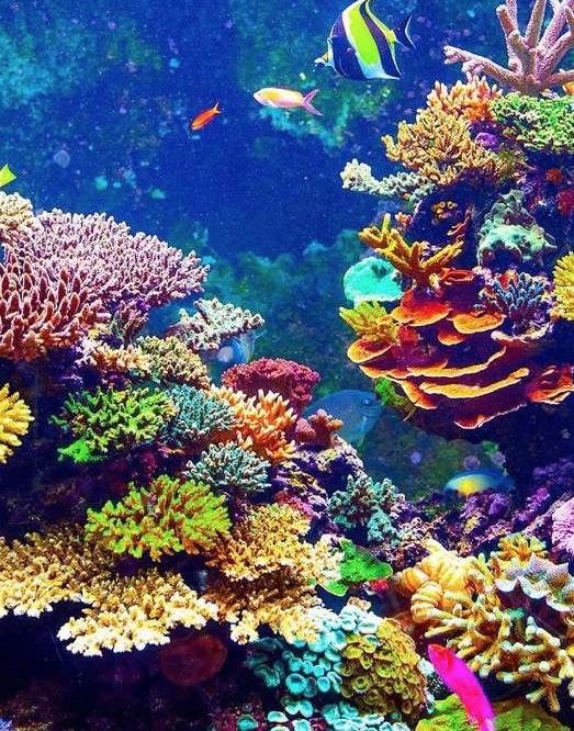 Arrecife mesoamericano primordial para una economía sustentable