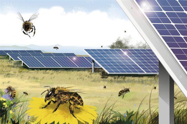 Polinización bajo las placas solares