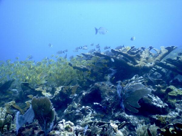 REMPA organizó taller sobre arrecifes coralinos para periodistas ambientales