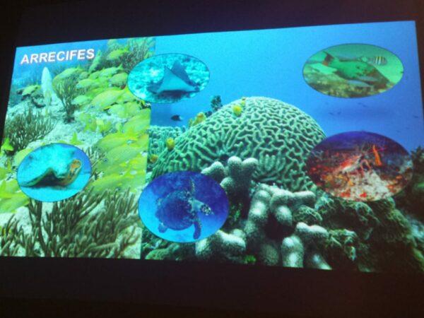 Cierre parcial en arrecifes de Cozumel por síndrome blanco