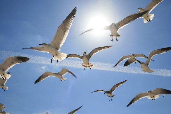 Aves y contaminación por plástico
