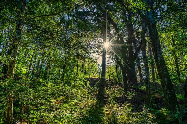 3 de 5 consumidores considera su salud condicionada al medio ambiente