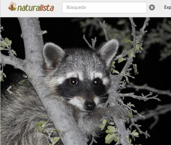 Naturalista, herramienta para conocer flora y fauna alrededor del mundo