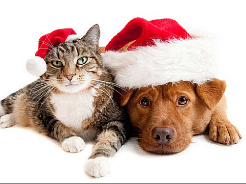 Dog and cat Xmas