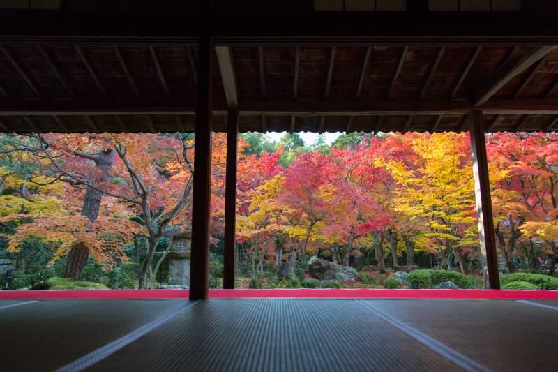 Kyoto Autumn Leaves Enkoji