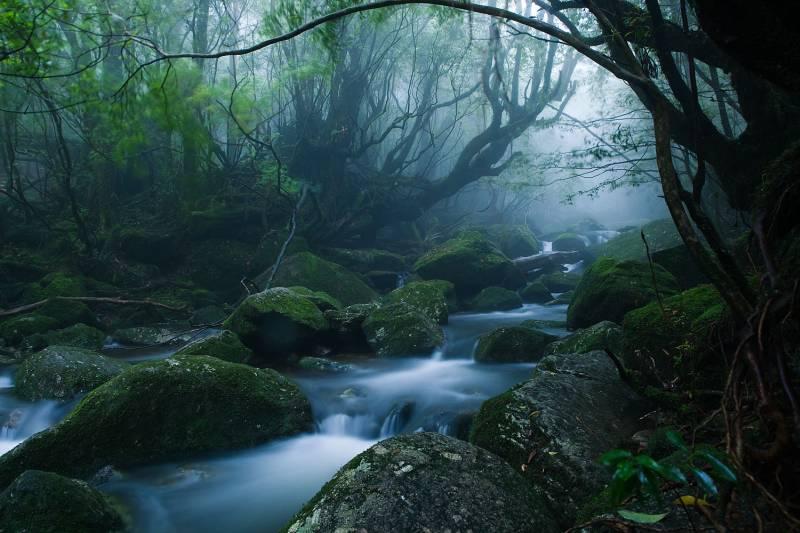 Yakushima Island Monoke forest
