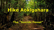 Aokigahara-Forest