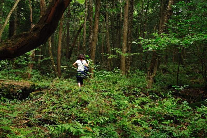 Aokigahara hiking