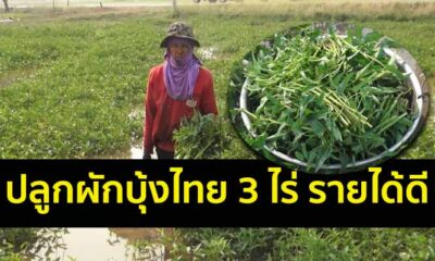 อาชีพเกษตร