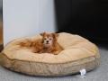 wx-lazy-dog-lounge