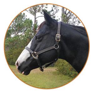 twilight horse riding lessons ormond beach