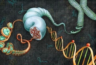 Linking number: A Topological property of DNA