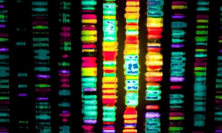 Why is pcr used in the process of dna sequencing?