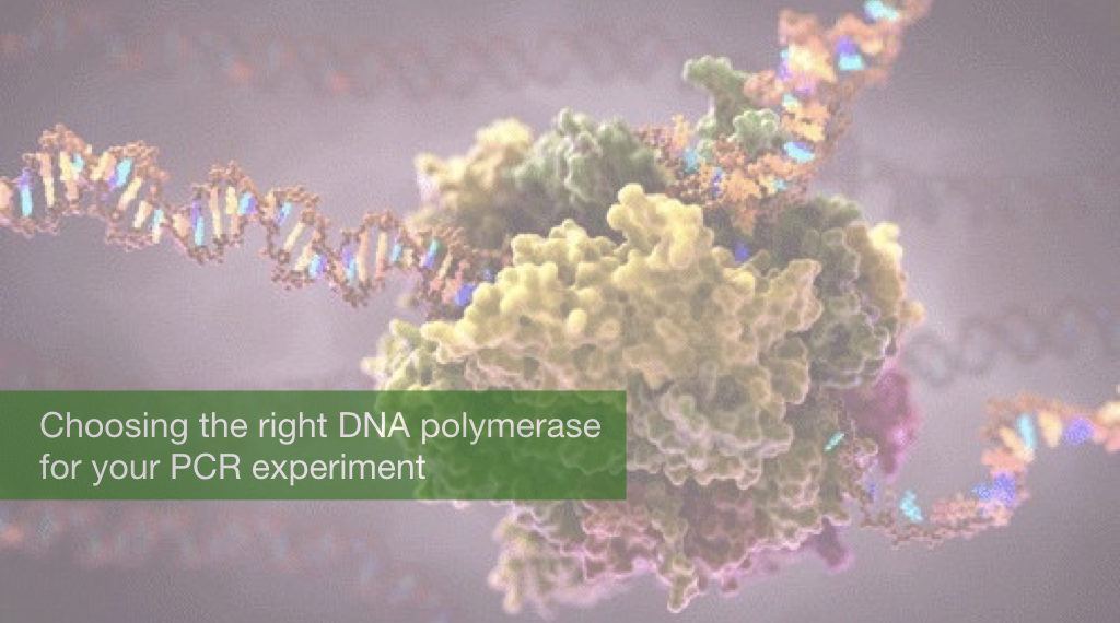 Choosing the right DNA polymerase for your PCR experiment