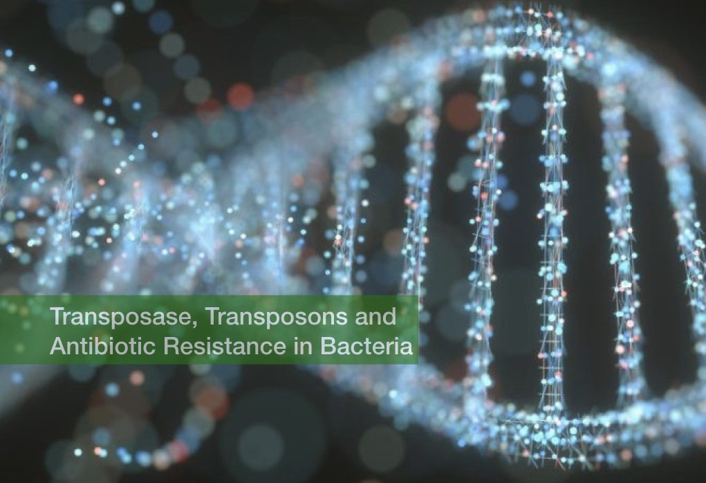 Transposase, Transposons and Antibiotic Resistance in Bacteria