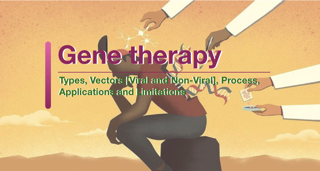 Gene Therapy: Types, Vectors [Viral and Non-Viral], Process, Applications and Limitations