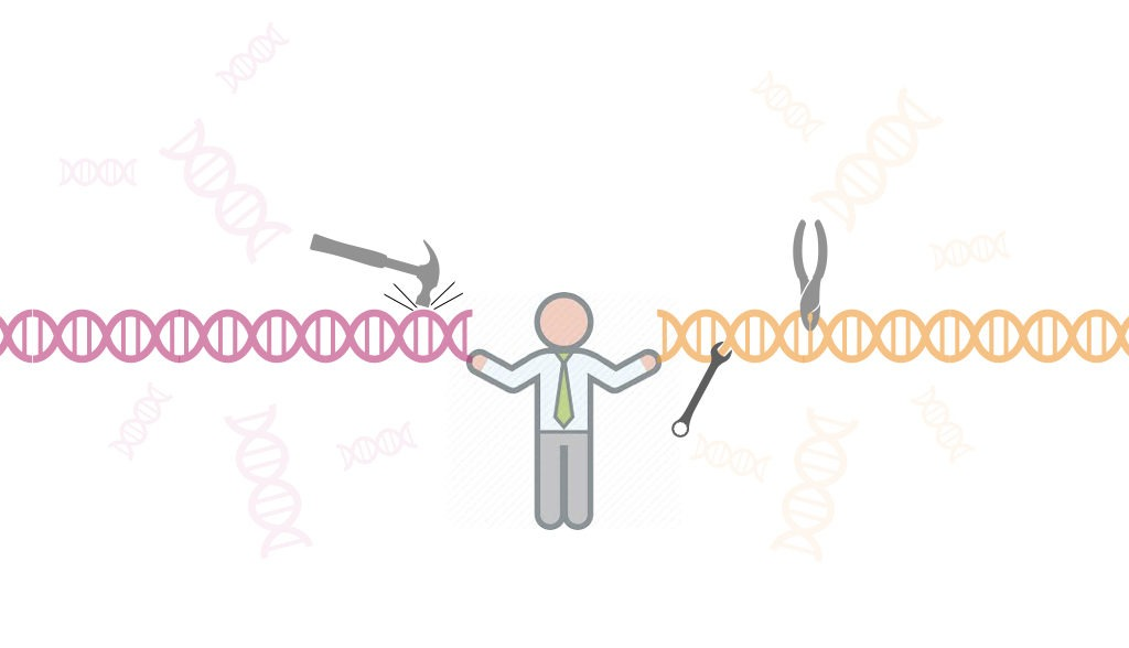 What is DNA ligase? and How T4 DNA ligase works?