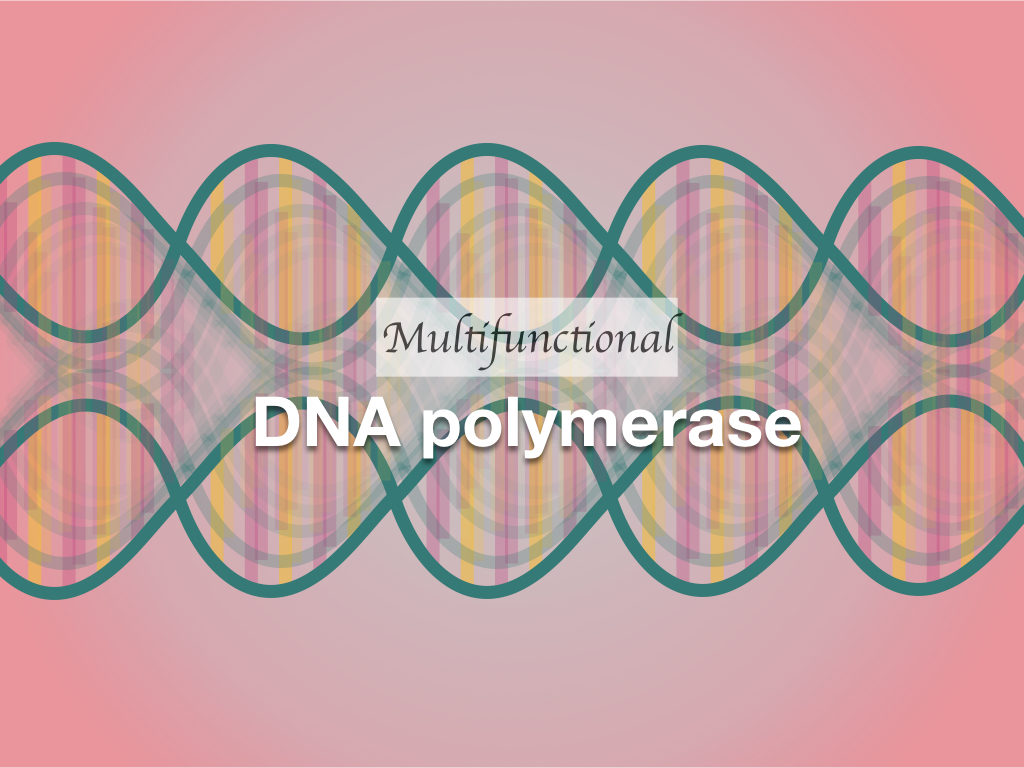 Multifunctional DNA Polymerase: An Overview