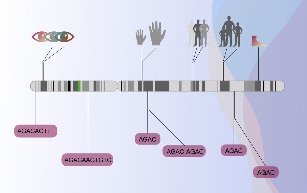 A Brief introduction to gene mapping