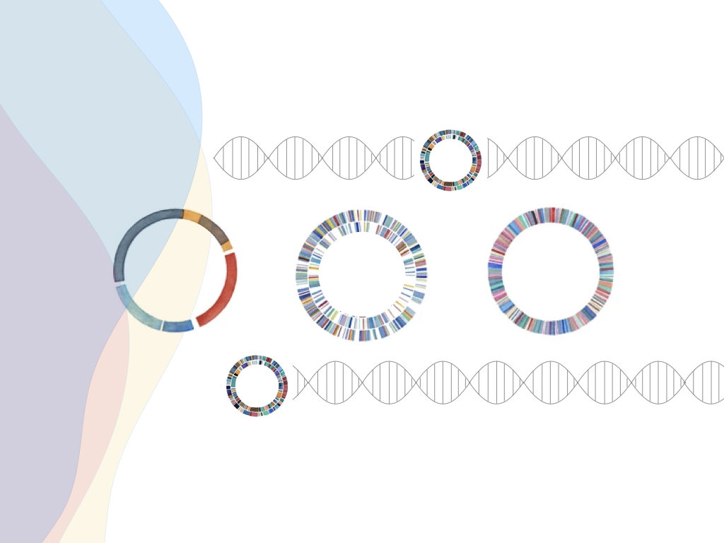 Plasmid DNA- Structure, Function, Isolation And Applications