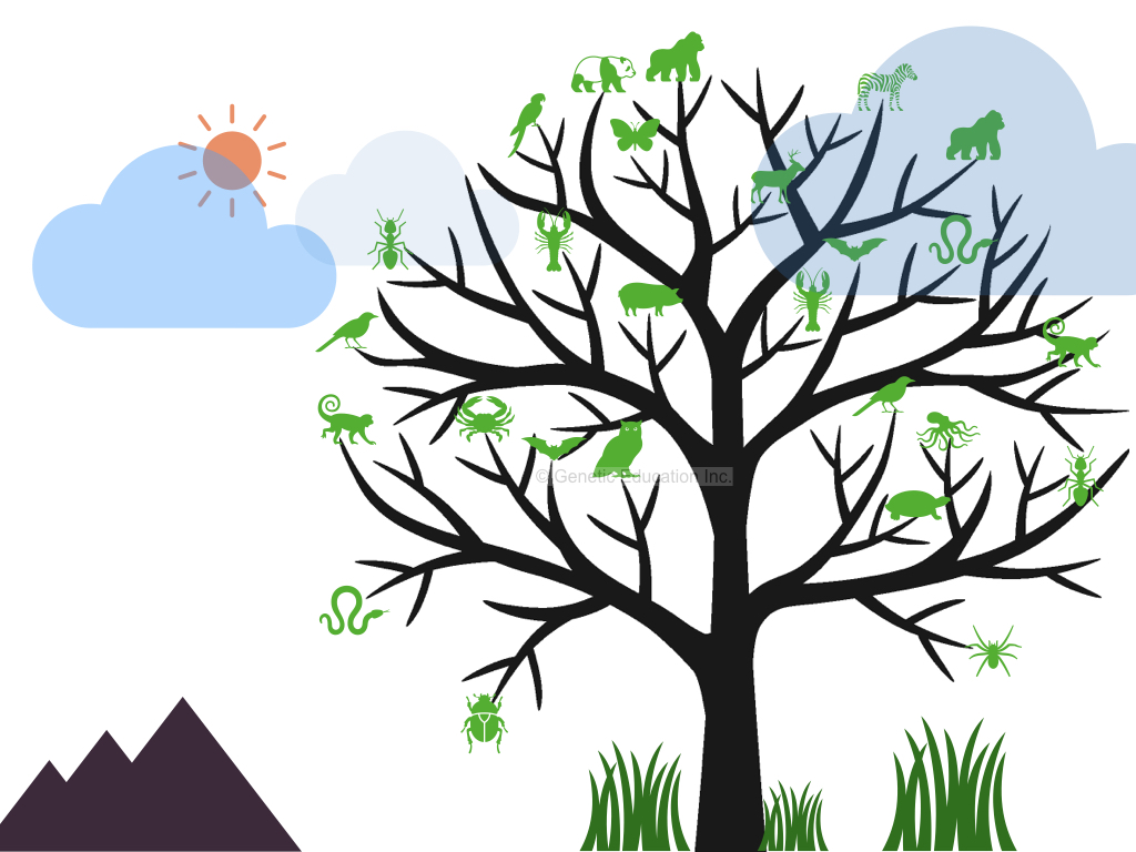 what is a phylogenetic tree and how to construct it.