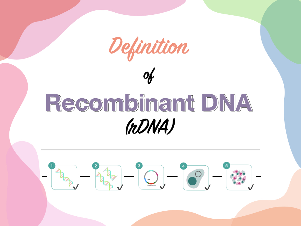 Definition of Recombinant DNA (rDNA)