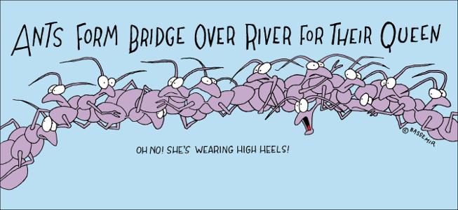 Ant.Bridge.png
