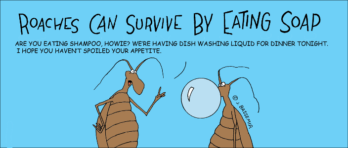 Roaches.Eat.soap.png