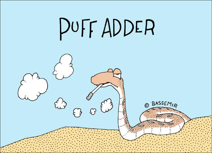 Snake.Puff.Adder.png