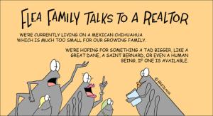 Flea family and the realtor