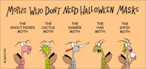 Moth.Hllwn.png