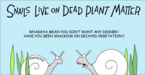 snail-decay-png