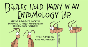 beetle-party-png
