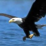 eagle-9D71DD8E22CE419AA71DB78D3C56576F